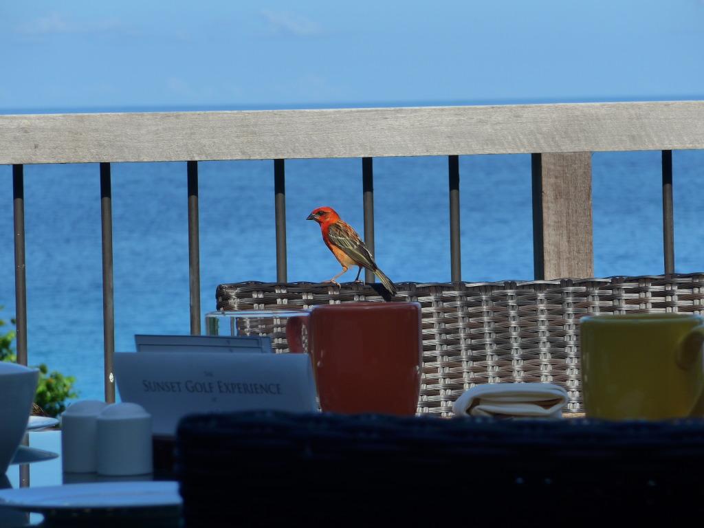 Sellised värvilised linnukesed lõbustasid meid hommikuti söögilauas :)